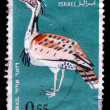 Large bird, Houbara Bustard (Chlamydotis undulata) - Stok fotoraf