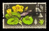 Fringed water lily ( Limnanthemum nymphaeoides ) — Stockfoto
