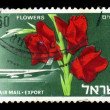 Flowers from Israel — Stock Photo