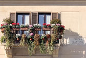 Windows with flowers, Piazza Navona, Rome, Italy — Stock Photo