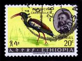 Bird wattled Ibis ( bostrychia carunculata ) — Stock Photo