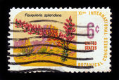 Desert plant Ocotillo - Fouquieria splendens — Stock Photo
