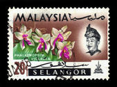 Postage stamp Malaysia 1965 Phalaenopsis Violacea, orchid endemic flower — Stock Photo