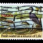 Постер, плакат: Life of water fauna