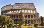 Roman Coliseum celebrates Christmas — Stock Photo