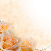 Soft cream roses on blurred background — Stock Photo