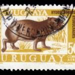 Постер, плакат: Capybara herbivorous mammal