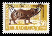 Capybara, herbivorous mammal — Stock Photo