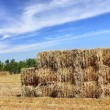 Mown hay harvested in large briquettes on field — Stock Photo #35064497