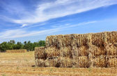 Mown hay harvested in large briquettes on the field — Stock Photo