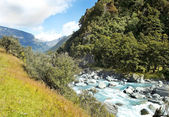 Landscape with river in New Zealand — Stock Photo