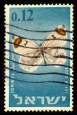 Zegris eupheme uarda — Stock Photo