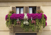 Balcony decorated with flowers petunias — Stock Photo