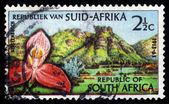 Red orchid, Kirstenbosch Botanic Gardens, Cape Town — Stock Photo
