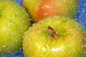 Lavar las manzanas — Foto de Stock