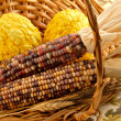 Indian Corn Still Life — Stock Photo