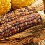 Indian Corn Still Life — Stock Photo #19635867