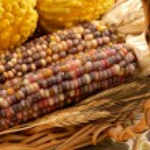 Indian Corn Still Life — Stock Photo