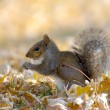 Stock Photo: Squirrel Eating