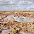 Petrified National Forest National Park - Stock Photo