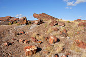 Petrified National Forest National Park — 图库照片