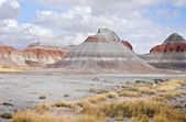 Petrified National Forest National Park — Photo