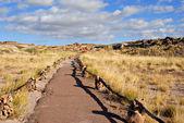 Petrified Forest National Park, Arizona — Stock Photo