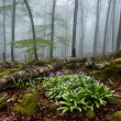 misty forest — Stockfoto