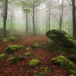 Misty forest — Stock Photo #34382631