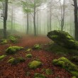Stock Photo: Misty forest