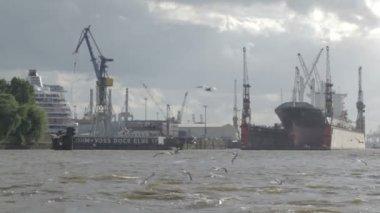 Port de hambourg. navire de charge, les goélands. — Vidéo