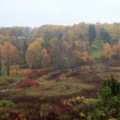 Aerial view of autumn forest and curving river in Toila, Estonia — Stock Video