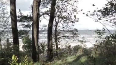 Squally wind on the shore of the Baltic sea. — Stock Video