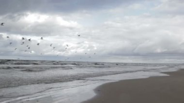Gulls fly above a sea coast. — Stock Video