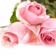 Three pink roses with water drops. — Stock Photo #21346623