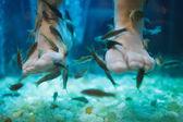 Fish spa pedicure wellness skin care treatment — Stock Photo