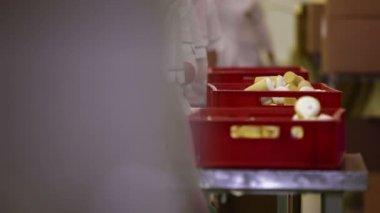 Ice-cream packing — Stock Video