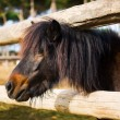 Little Horse — Stock Photo #28515901