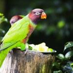 Parrot — Stock Photo #29014079