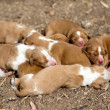 Newborn  dogs — Foto de Stock