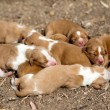 Newborn  dogs — Stockfoto