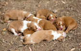Newborn dogs — Stock Photo
