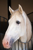 Lindo cavalo — Foto Stock