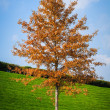 Autumn tree — Stock fotografie