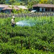 Farmer spraying pesticide on his field — Stock Photo