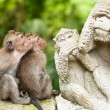 Long-tailed macaques — Stock Photo #18917141