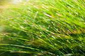 Green grass blades background — Stock Photo