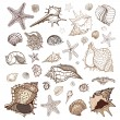Sea shells collection. — Stock Vector