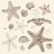 Stock Vector: Sea Starfish set. Hand drawn vector illustration.