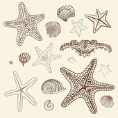 Sea Starfish set. Hand drawn vector illustration. — Stock Vector